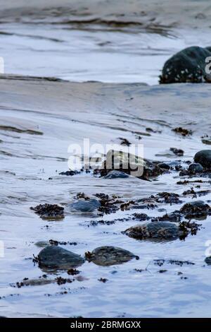 algas y salmonetes cubrían rocas en la piscina de marea en la orilla del mar