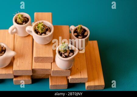 Pequeños cactuses ornamentales en las cuestas de cerámica sobre tablas de madera. Composición de mini jardines de suculentos espinosos sobre el fondo azul. PL
