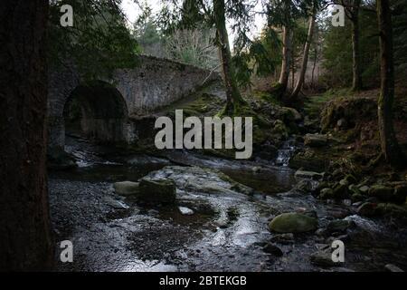 Parque Forestal Tollymore Irlanda del Norte como se ve en Juego de Tronos Foto de stock