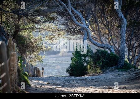 Senderismo en Volta des General, paraje Natural de la Sierra de la Tramuntana, Banyalbufar, Mallorca, Islas Baleares, España.