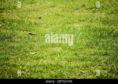 Vista superior del concepto de jardín de césped brillante utilizado para hacer fondo verde, césped para el entrenamiento de campo de fútbol, césped campos de golf césped verde patrón t