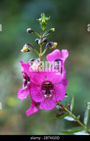 Hermosa flor fuera en el jardín, de cerca en macro y colores vivos. Los pétalos y los detalles son tan claros y nítidos de deleite floral. Foto de stock