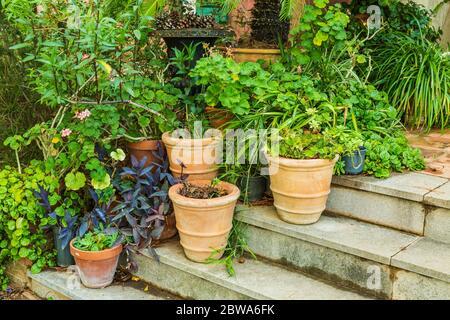 Variación de plantas y macetas en el jardín mediterráneo en las escaleras