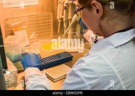 Preparación de muestras para el diagnóstico de PCR. El investigador en una caja laminar pipeteó las muestras en una placa de PCR de 96 pocillos.