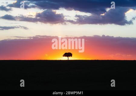 Silueta de árbol solitario en línea horizonte en Kenia África con colorido atardecer pastel