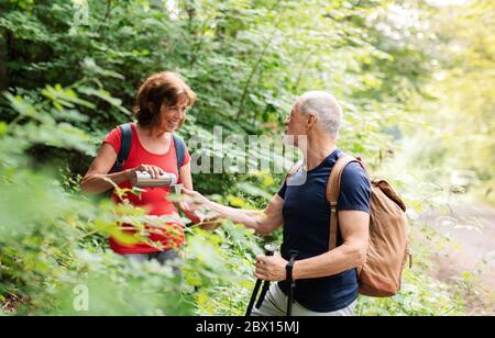 Pareja de turistas mayores con mochilas en un paseo por el bosque en la naturaleza.
