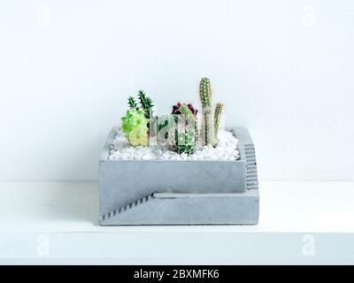 Muchas clases de plantas de cactus verdes en el jardín cuadrado de hormigón en la estantería sobre fondo blanco.