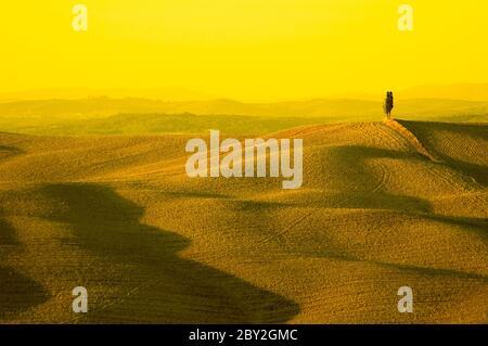 un árbol ciprés solitario en la colina - tierras típicas de la toscana Foto de stock