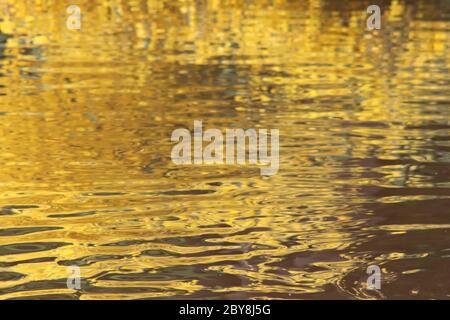 Reflejos de oro y verde en estanque
