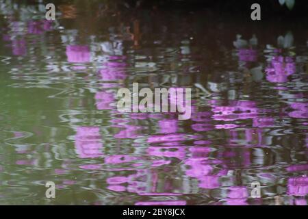 Reflejos púrpura y verde en estanque