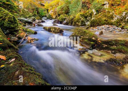Cascadas en un arroyo de montaña con rocas moscosas en el Parque Forestal Tollymore
