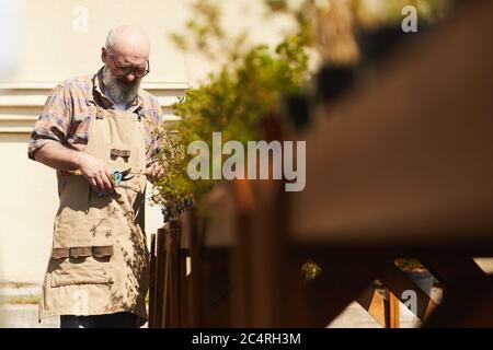 Retrato de cintura arriba de un hombre mayor barbudo que cuida de las plantas mientras trabaja en un jardín o plantación al aire libre, espacio de copia