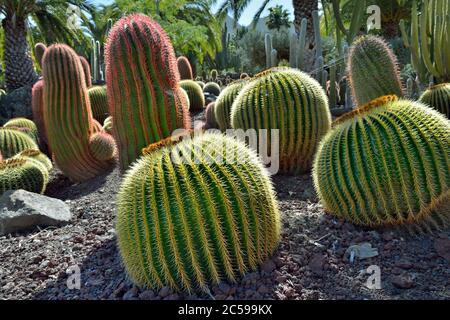 Hermoso jardín tropical de cactus, Gran Canaria. España