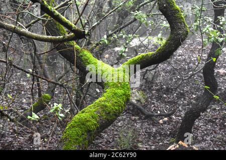 Tronco de árbol en un bosque brumoso