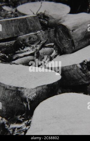 Fotografía de estilo de vida en blanco y negro de la época de los 70 de un patrón natural se convirtió en una idea y noción abstractas.