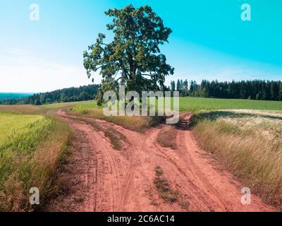 Cruce de caminos de campo y un solo árbol de cal en el horizonte con el campo en primer plano.
