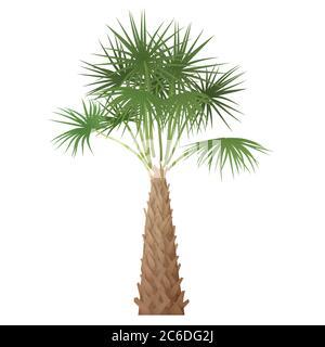 Árbol de palma tropical exótico de alto detalle aislado Foto de stock