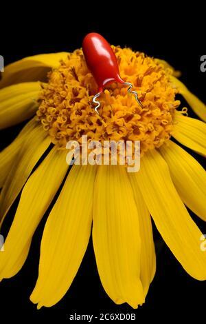 Robot de insecto rojo sobre flor amarilla de marguerite