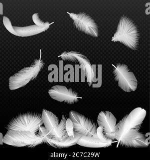Real blanco vector pájaro retorcidas plumas cayendo sobre negro transparente alfa fondo Foto de stock