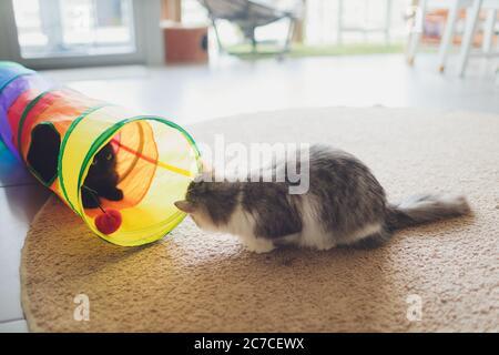 Lindo gatito jugando en un túnel de gato.