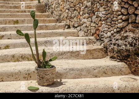 Imagen colorida de Cactus en macetas en escalones de piedra