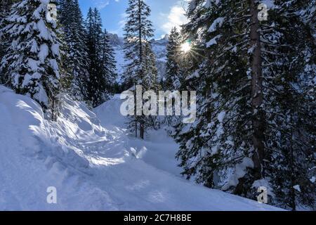 Europa, Austria, Vorarlberg, Montafon, Rätikon, Gauertal, paisaje idílico de invierno en el bosque de montaña cubierto de nieve Foto de stock