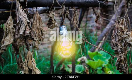 Bombilla brillante colgando de un árbol con fondo otoñal