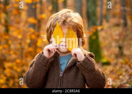 El niño cubre los ojos con una hoja de arce amarilla. Retrato de niño de otoño. Retrato al aire libre de otoño de un hermoso niño feliz caminando en el parque o bosque