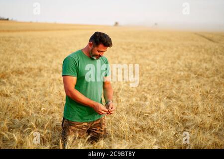 Agrónomo que examina la cosecha de cereales antes de cosechar sentado en el campo de oro. Un granjero sonriente que sostiene un manojo de orejas de trigo cultivadas maduras en las manos