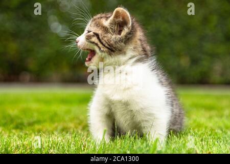 gatito de bebé en el jardín para la madre gato