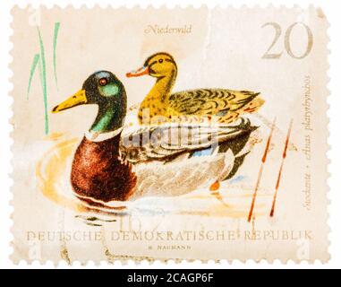 Postal impresa en la URSS muestra patos salvajes