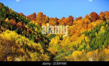 Hermoso color naranja, rojo, amarillo y verde en el bosque de otoño, muchos árboles en las colinas. Hermoso paisaje otoñal con árboles amarillos.