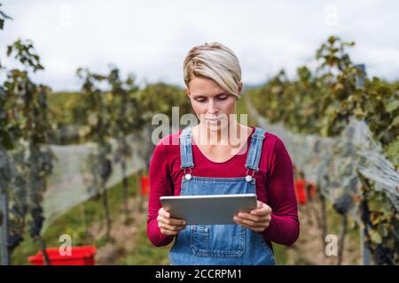 Retrato de la mujer que sostiene la tableta en el viñedo en otoño, concepto de cosecha.