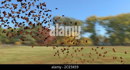 Grupo de mariposas monarca, Danaus plexippus enjambre volando sobre un campo