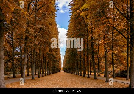 Un hermoso callejón sin fin de árboles altos conducen a la horizonte en otoño