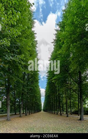 Un hermoso callejón sin fin de árboles altos conducen a la horizonte