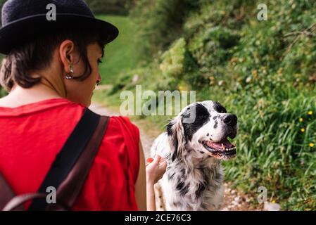 Vista posterior de gran ángulo de la elegante mujer con mochila Camino arenoso en el campo con el perro Setter Inglés