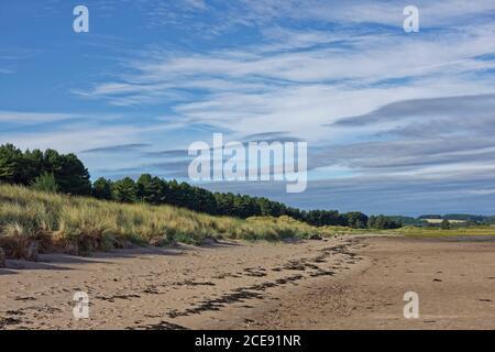 La playa de arena en Tay Heath, frente al bosque de pinos de la Reserva Natural de Tentsmuir, con las dunas cubiertas de hierba que bajan a la suave estantería