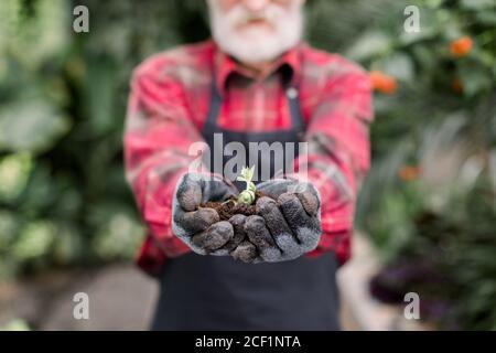 Primer plano imagen de las manos de jardinero macho con barba en guantes negros, sosteniendo suelo con planta joven suculenta para la agricultura o la plantación