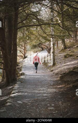 Vista posterior de la mujer anónima viajero en la cálida chaqueta de caminar En el bosque mientras se visita el Parque Forestal Tollymore en Irlanda del Norte en el día de la primavera