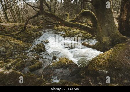 Paisaje primaveral de parque forestal con un pequeño río que fluye Entre los viejos árboles y piedras cubiertas de musgo en el norte Irlanda