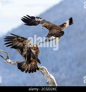 Eagles luchando