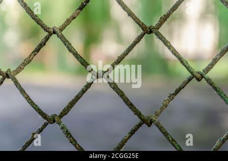 Viejos eslabones de la cadena de la cerca del metal en el fondo verde, malla del metal Foto de stock