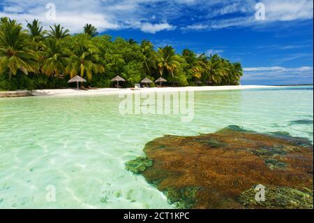 Hermoso paraíso tropical en Maldivas con palmeras coco colgando sobre el mar blanco y turquesa. Arrecife de coral es visible bajo el agua.