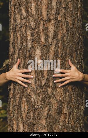 Concepto humano y natural. Mujer manos abrazando el pino en el fondo del follaje oscuro con el espacio de copia