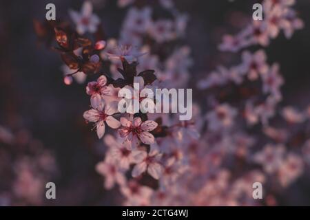Flores de primavera, flores, naturaleza