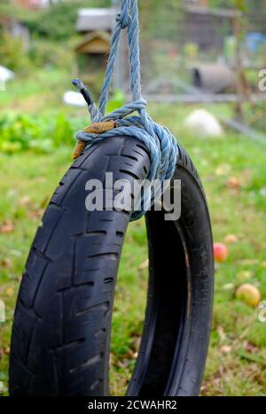 cuerda atada alrededor del neumático de goma del coche en el árbol en el jardín, norfolk, inglaterra
