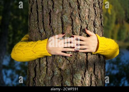Manos de la mujer abrazando el tronco del pino en el bosque de otoño concepto de ecología y medio ambiente, estilo de vida ecológico - cambiar el mundo, la protección para la vida y el planeta