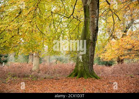 Un solo árbol se muestra aislado, en otoño. Foto de stock