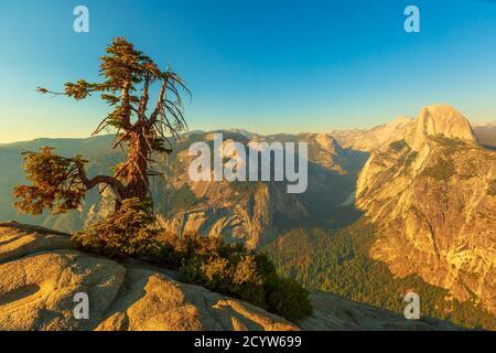 panorama y árbol de Glacier Point en el Parque Nacional Yosemite, California, Estados Unidos. La vista desde Glacier Point: Half Dome, Liberty Cap, Yosemite